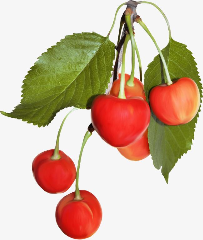 Cherries clipart bunch cherry. A of fruit yanhong