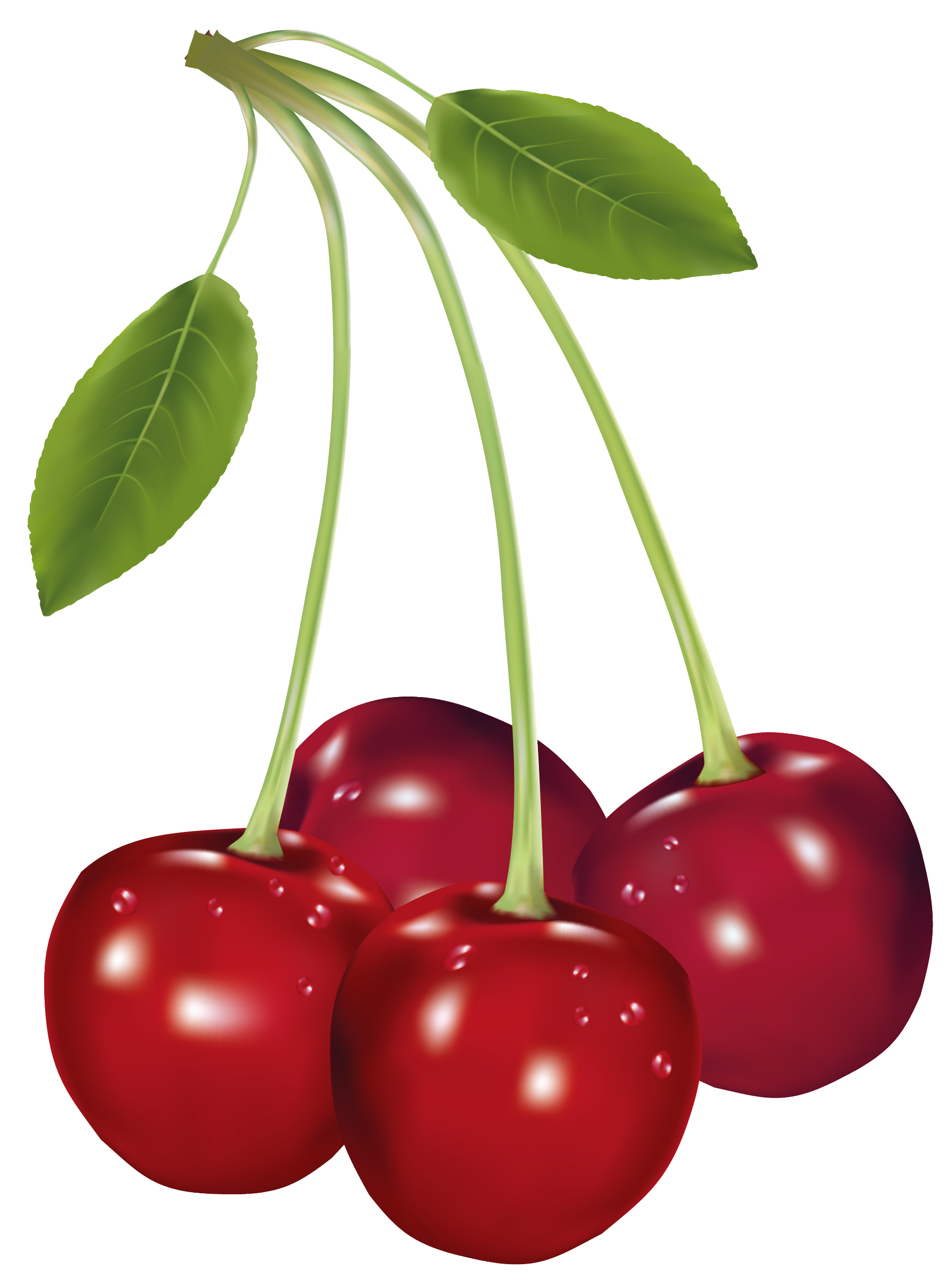 Cherries png picture gallery. Cherry clipart cherry fruit