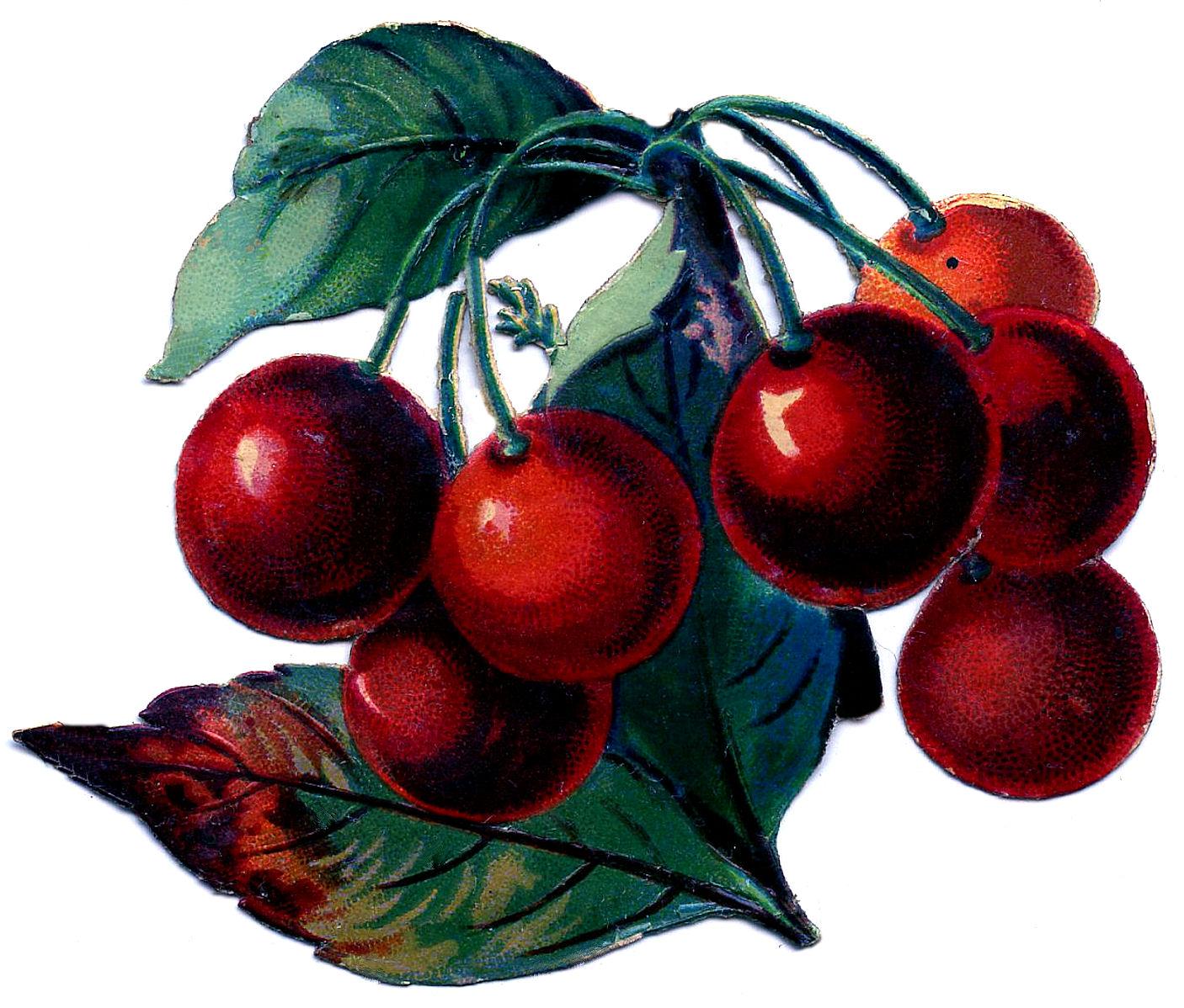 Vintage clip art the. Cherry clipart bunch cherry