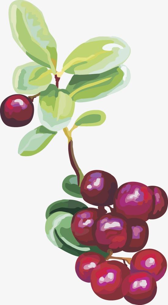 Fruit vector png image. Cherries clipart cranberry