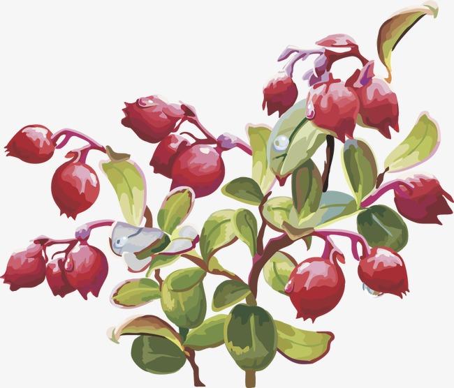 Cherries clipart cranberry. Fruit vector png image