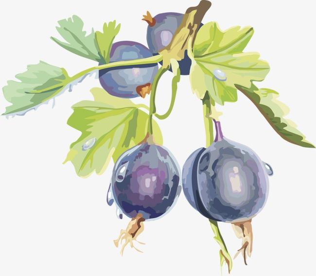 Fruit cherry blackberry vector. Cherries clipart cranberry
