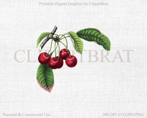 Cherries clipart stem. Vintage cherry clip art