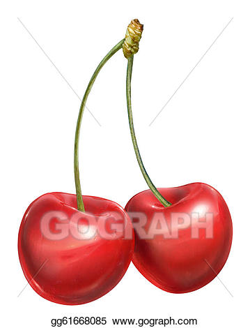 Drawing couple with stems. Cherries clipart stem
