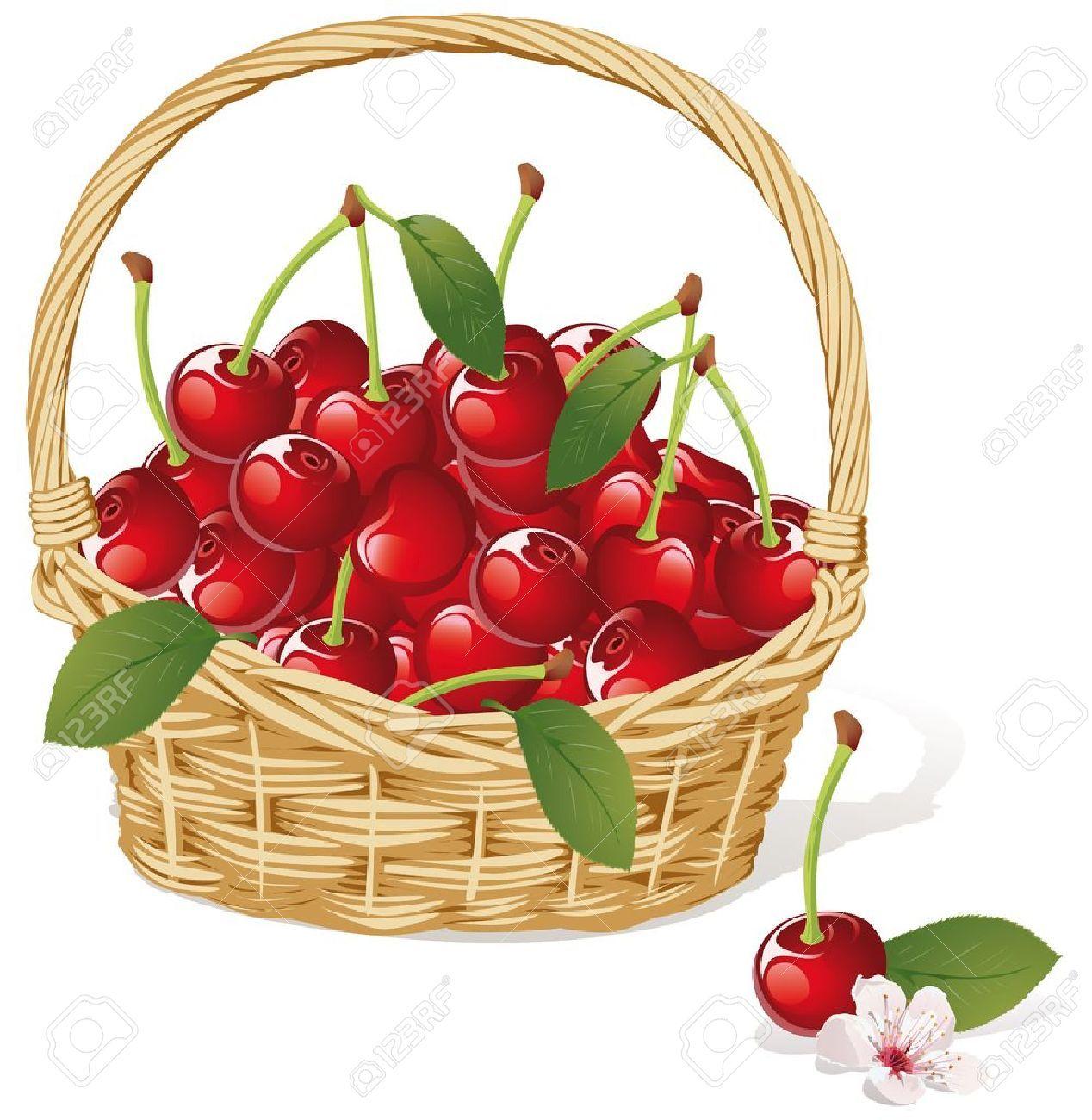 Cherry basket royalty free. Cherries clipart vector