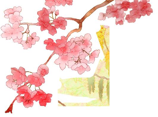 By dothenyancat on deviantart. Cherry blossom flower png