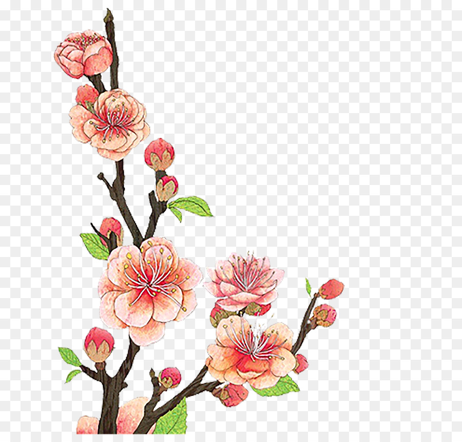 Graphic design plum blossom. Cherry clipart bunch cherry