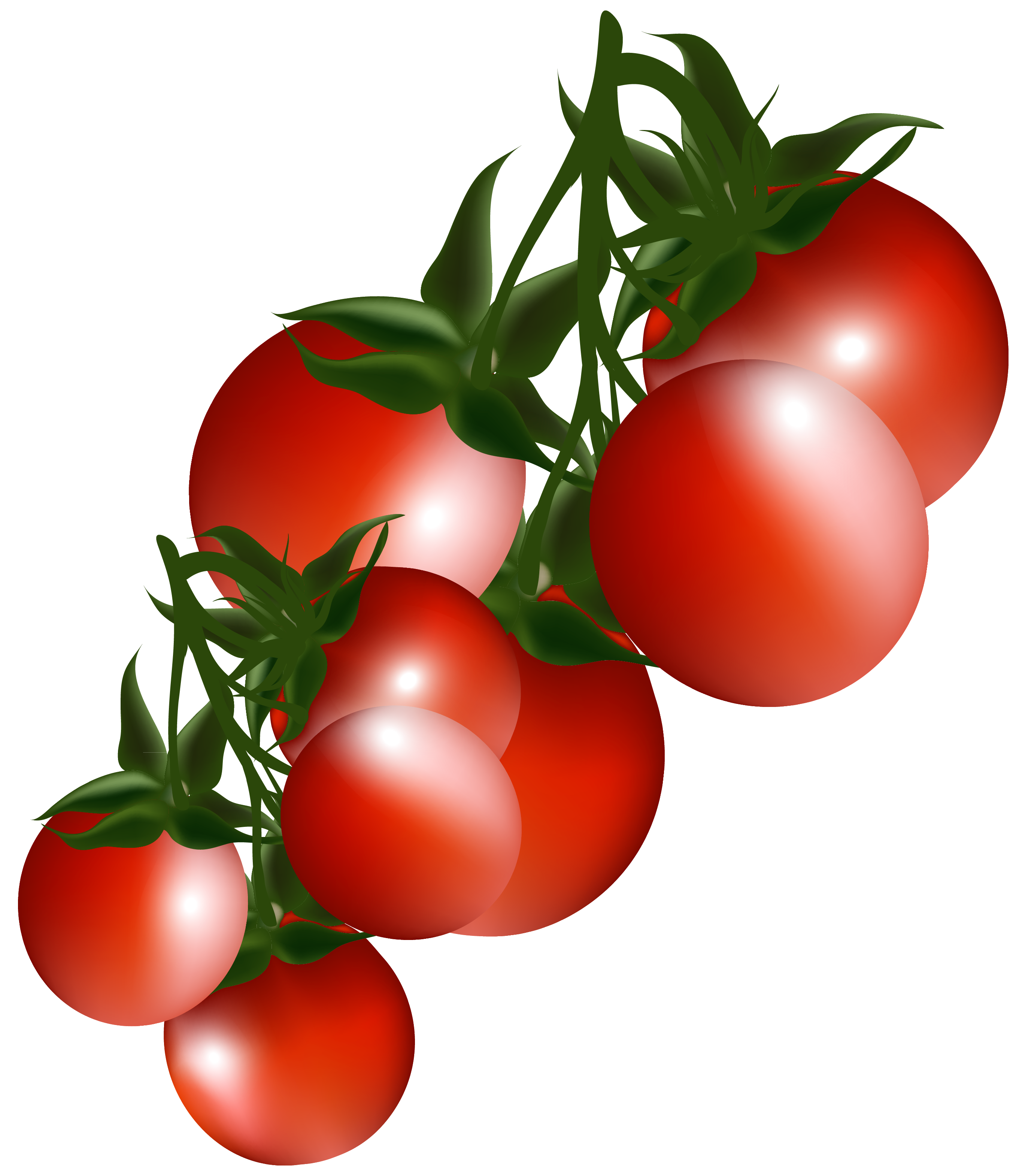 Tomatoes branch png picture. Fruits clipart bush