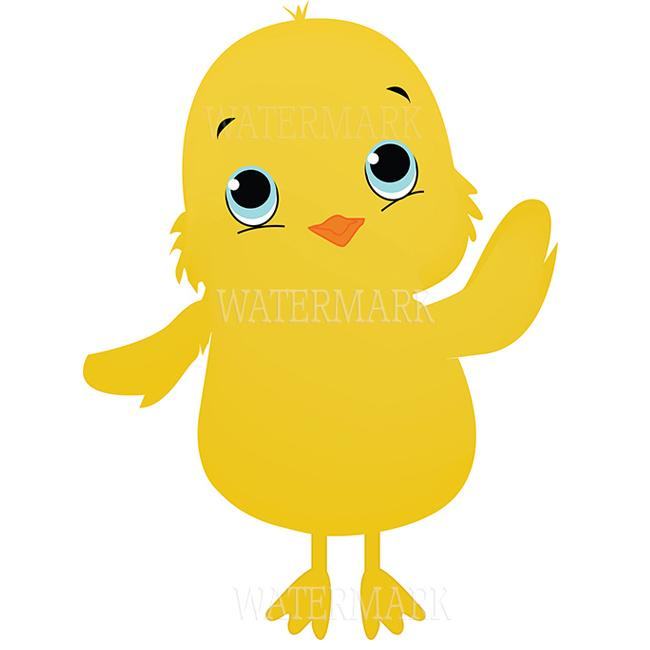 Chicken baby chick