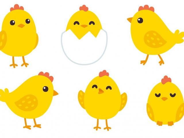 Chick clipart baby chick. Picture of free download