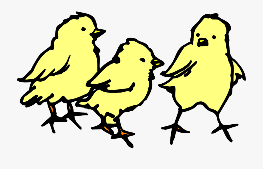 Png clip art chickens. Chick clipart baby chicken