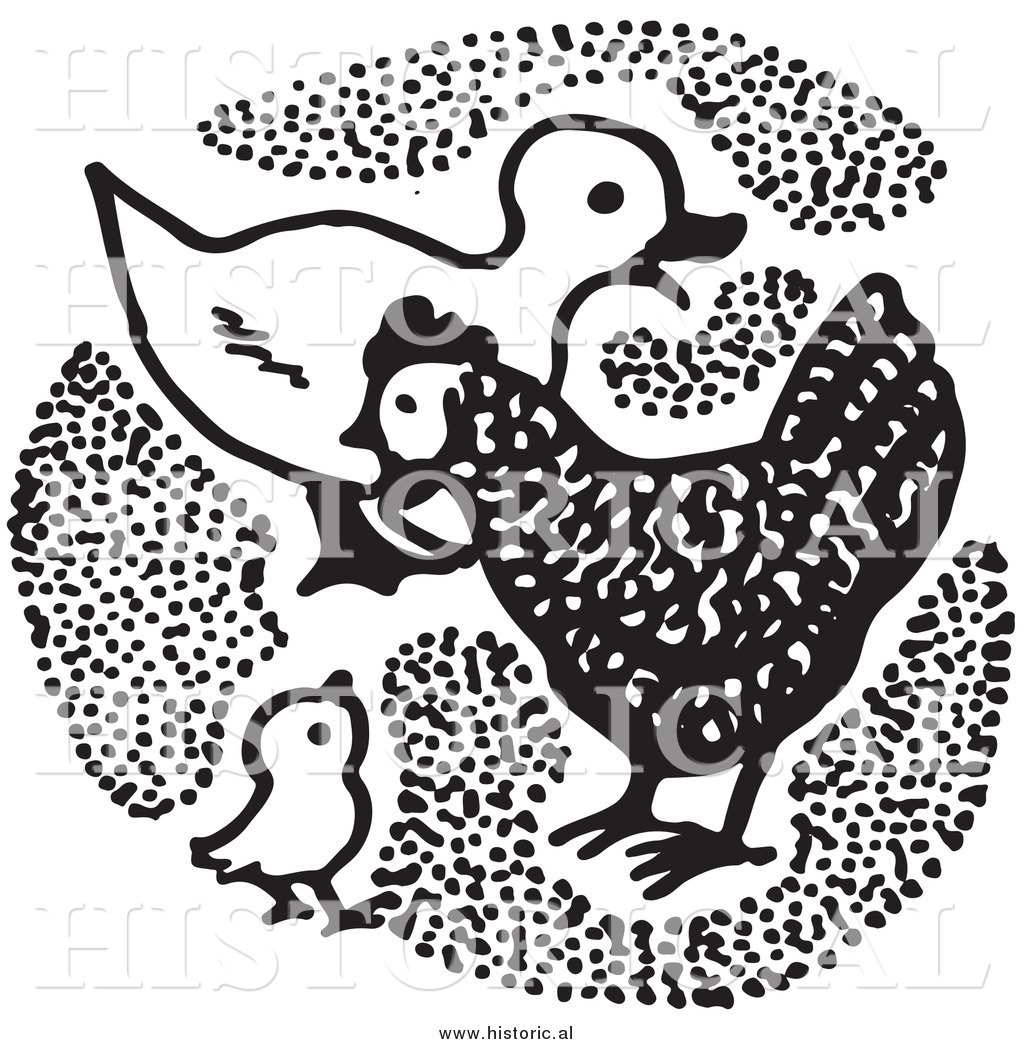 Chick clipart duck. Of a with chickens