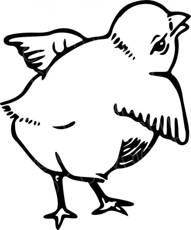 Black white line drawing. Chick clipart fluffy