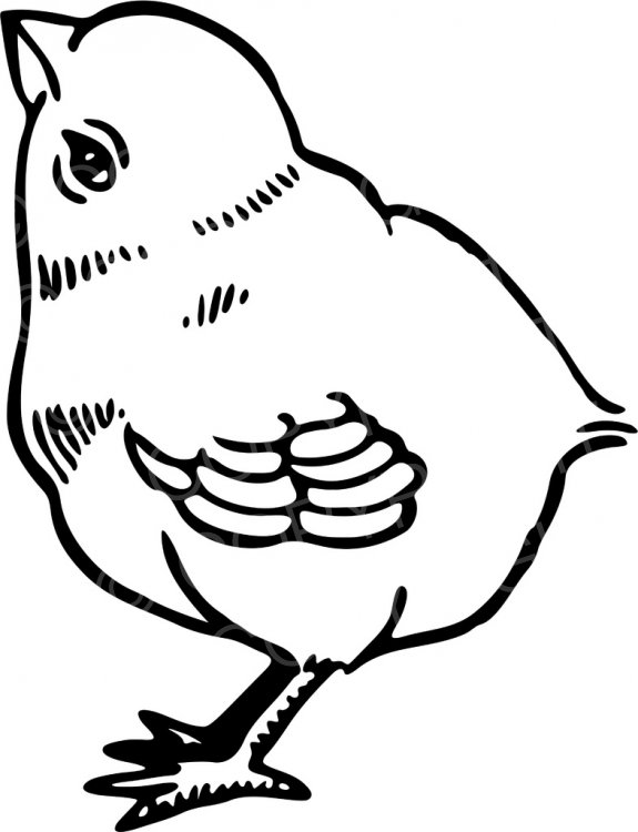 Chick clipart line drawing. Black white of a