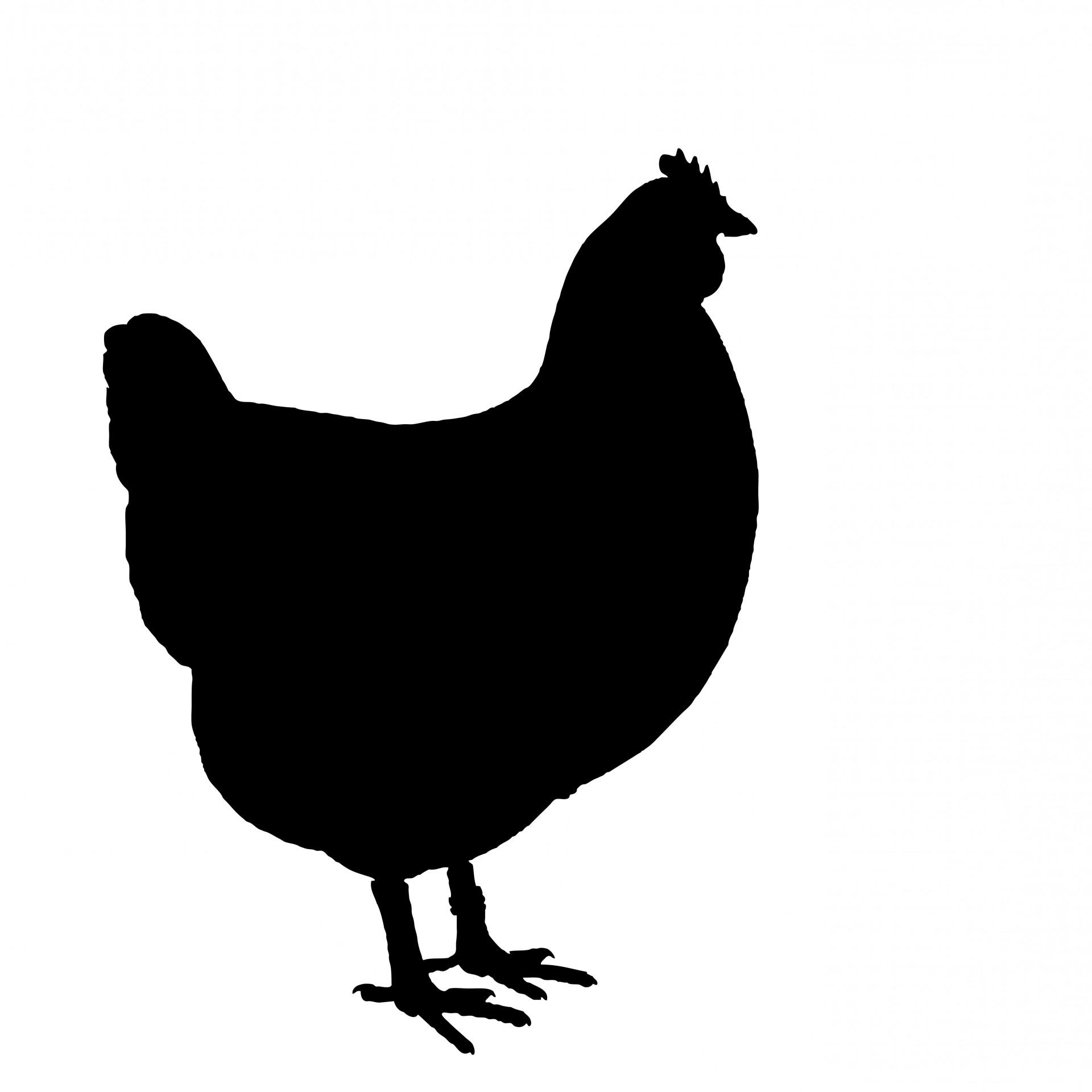 chick clipart silhouette