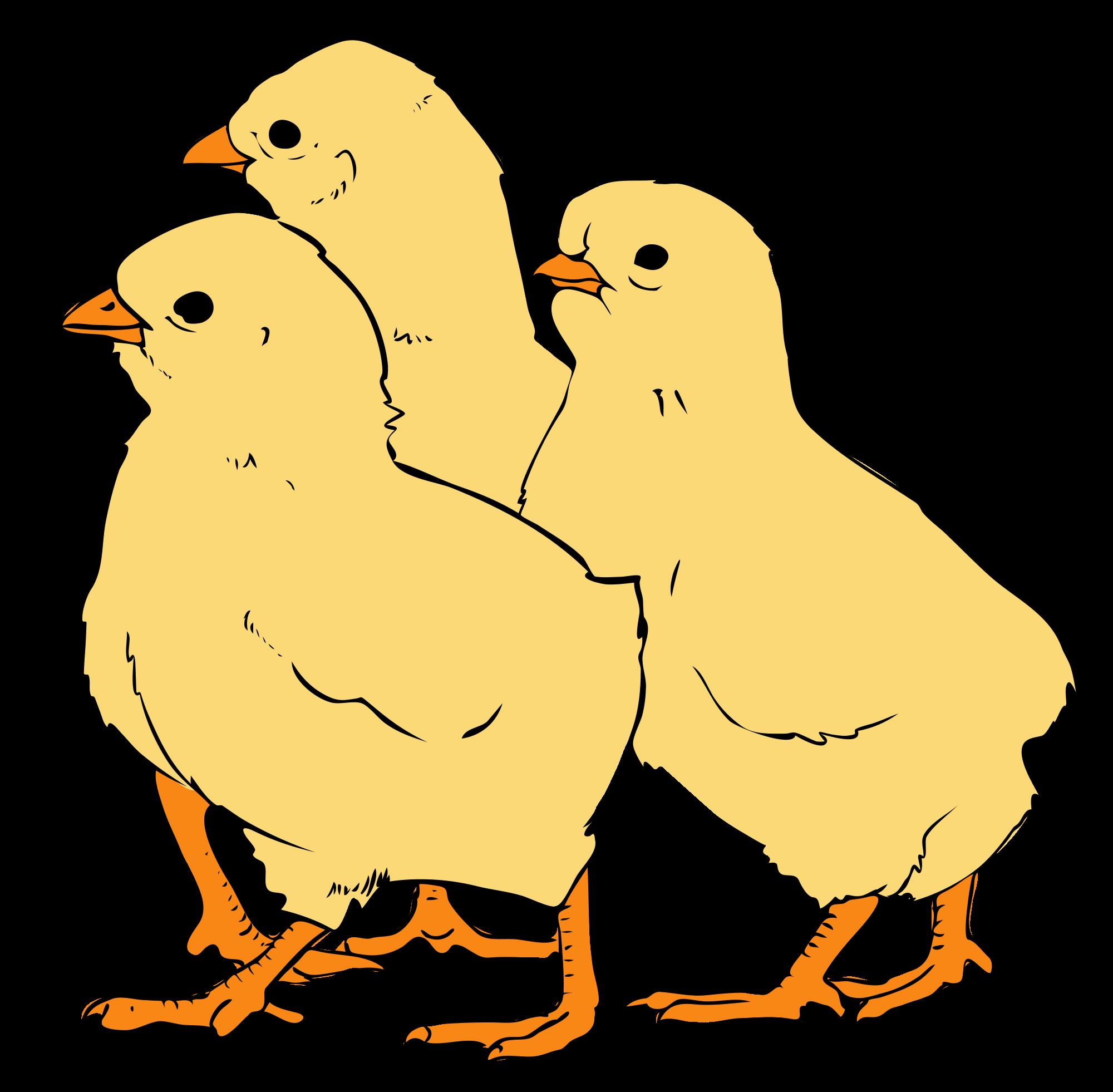 File chicks svg wikimedia. Chickens clipart logo
