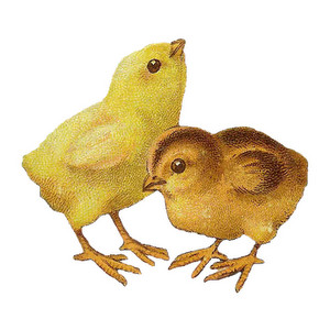 Chick clipart vintage. Free cliparts download clip