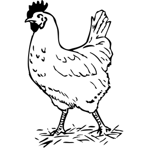 Halloween google search fall. Chickens clipart black and white