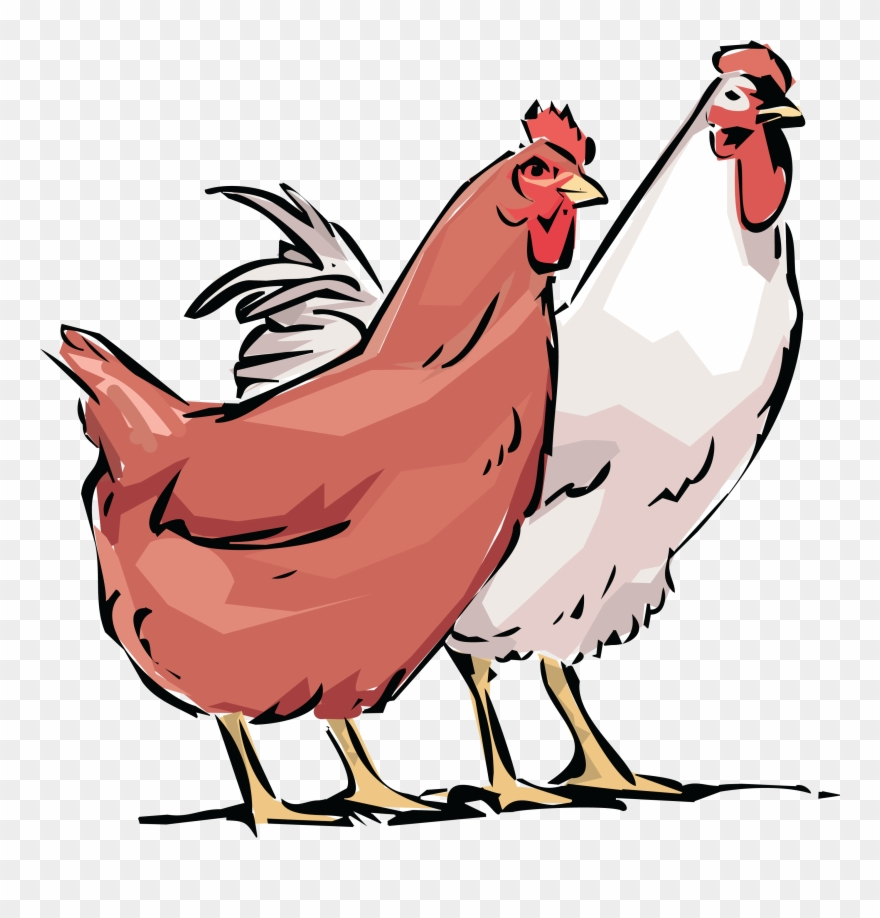Chickens clipart rooster. Free of a chicken