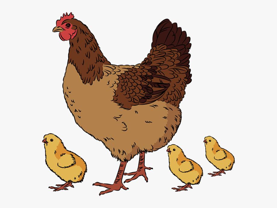 Clip art of a. Chickens clipart hen