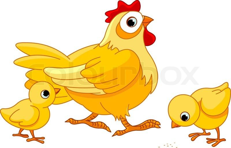 Mother hen with its. Chickens clipart vector