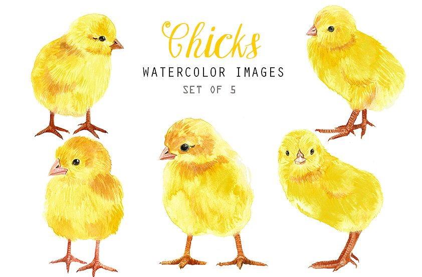 Chick clipart baby chicken. Watercolor chicks illustrations creative