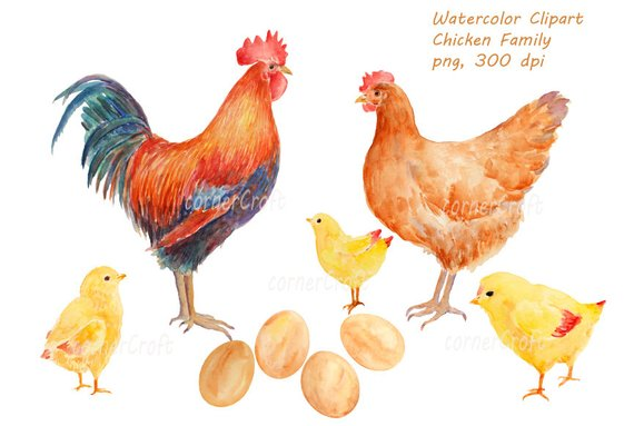 Hand drawn chicken family. Chickens clipart watercolor