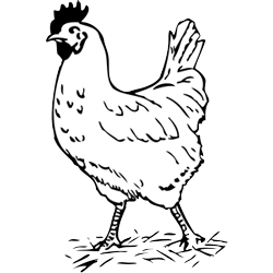 Free chicken download clip. Chickens clipart black and white