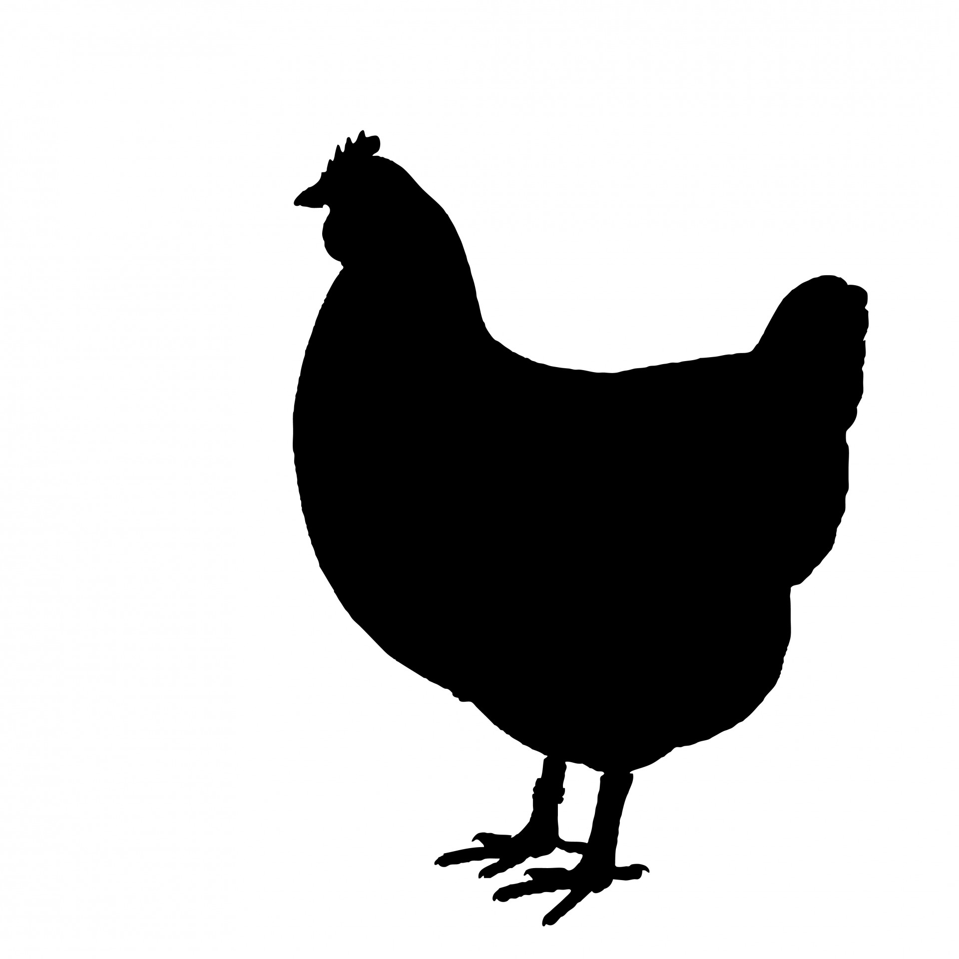 Silhouette free stock photo. Animals clipart chicken