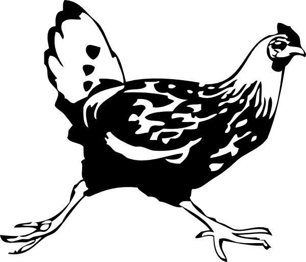 Chickens clipart vector. Running chicken clip art