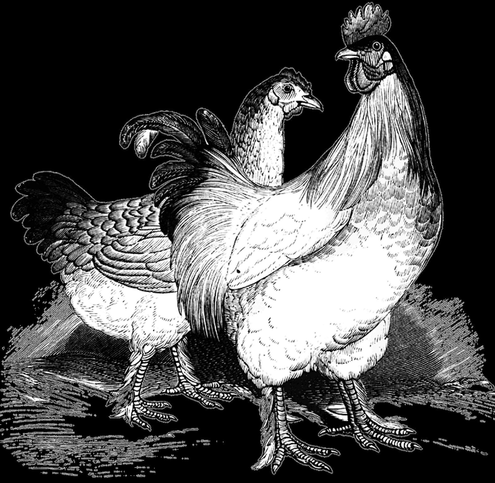 Stamp clipart vintage. Chicken clip art free