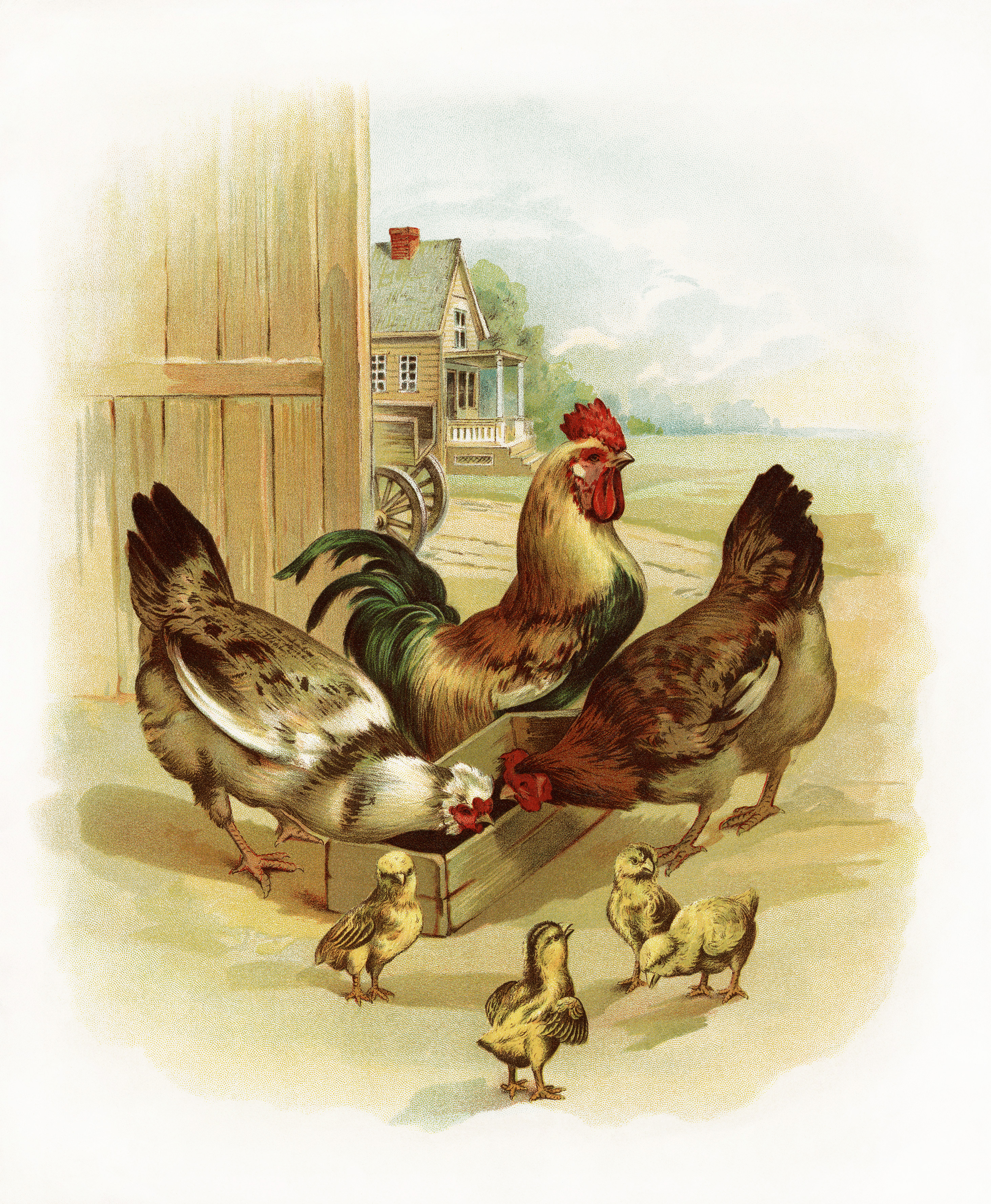 Animals clipart rooster. Chickens and chicks at