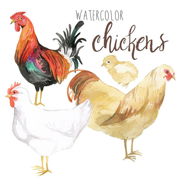 Clip art rooster poultry. Chickens clipart watercolor