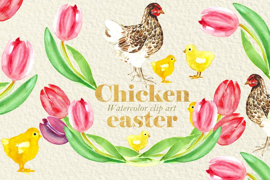 Chickens clipart watercolor. Easter chicken illustrations creative