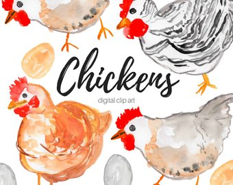 Chicken etsy animal farm. Chickens clipart watercolor
