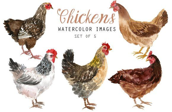 By yesfoxy on creativemarket. Chickens clipart watercolor