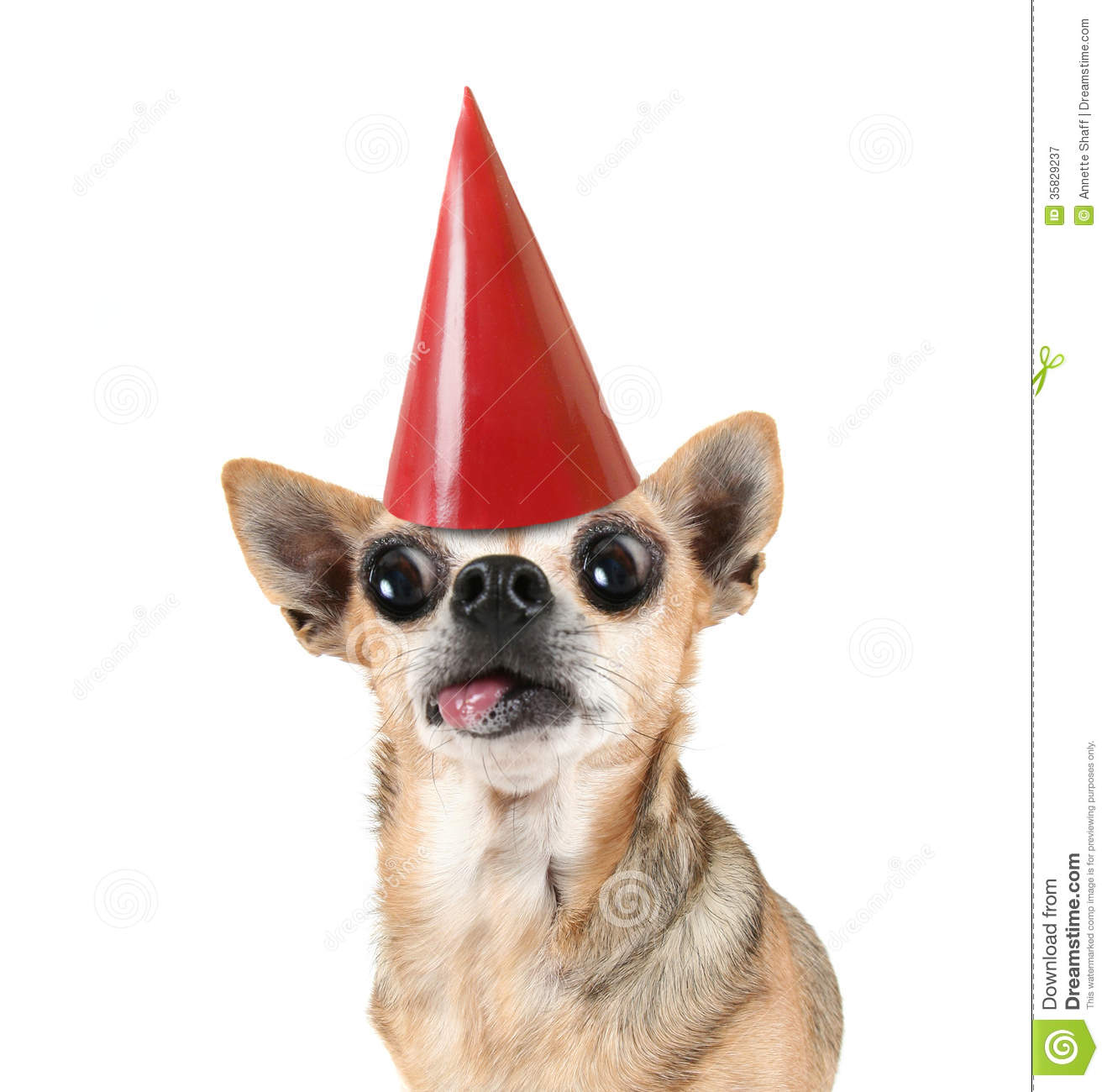 Chihuahua clipart angry chihuahua. Cilpart ingenious ideas birthday