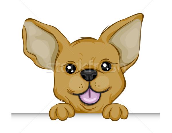 Chihuahua clipart angry chihuahua. Stock vectors illustrations and