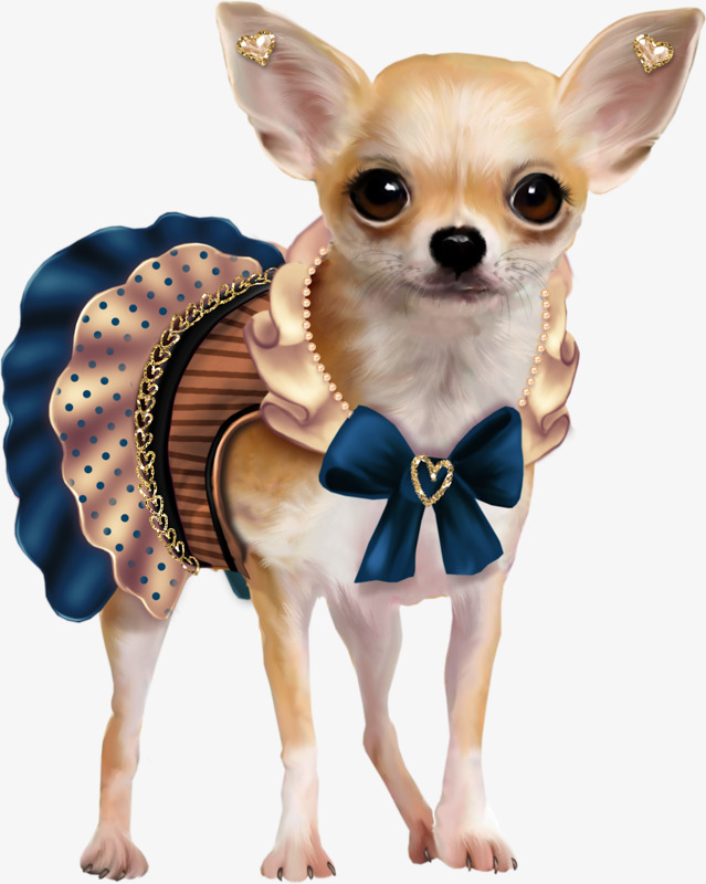Cute lovely png image. Chihuahua clipart chihuahua puppy