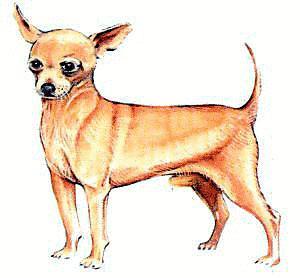 Chihuahua clipart chiwawa. Free christmas cliparts download