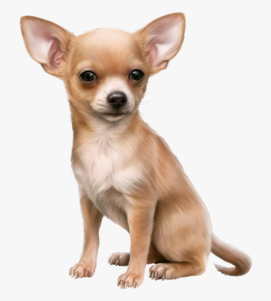 Chihuahua clipart chiwawa.  mileidi dog png