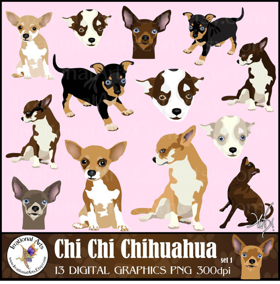 Chihuahua clipart face. Chi set gorgeous full