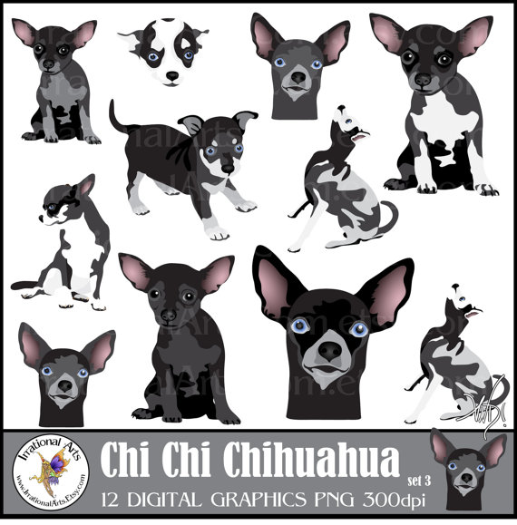 Chi set dog clip. Chihuahua clipart file