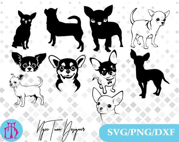 Chihuahua clipart file. Svg png dxf for