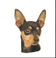 chihuahua clipart mini pinscher