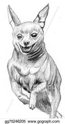 Drawing sketch dog miniature. Chihuahua clipart mini pinscher