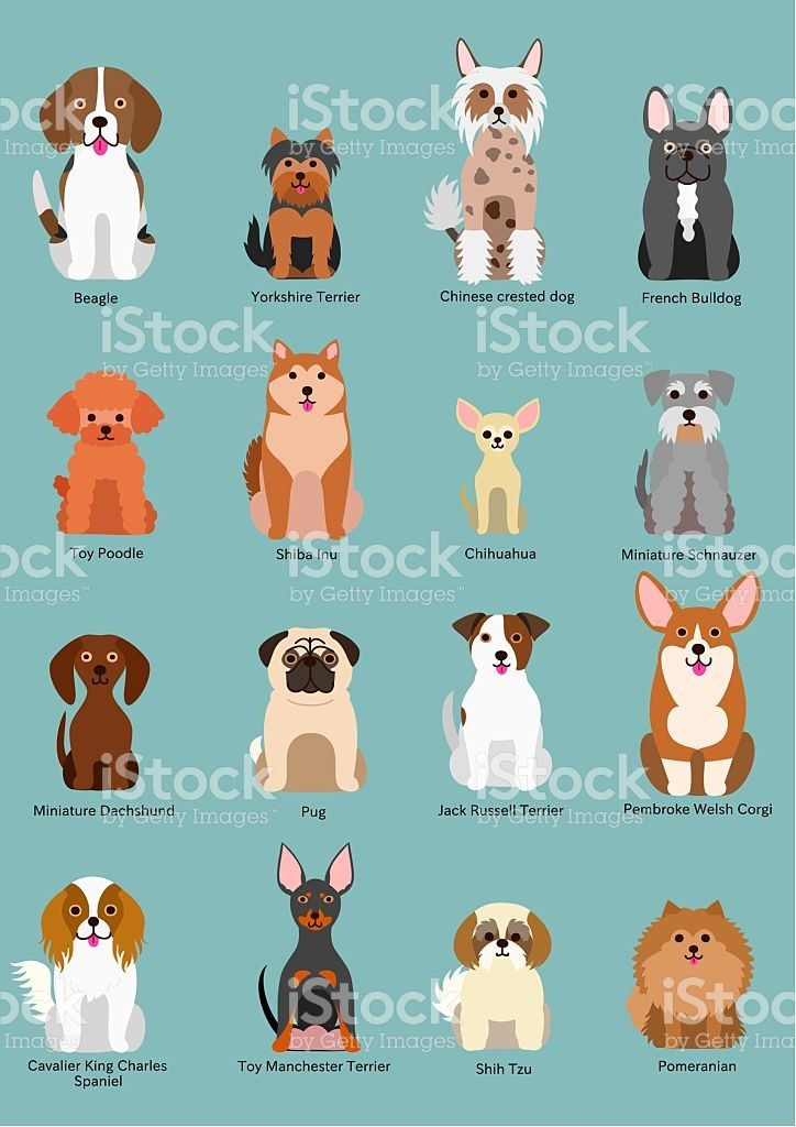 Cute sitting dog breed. Pet clipart small pet