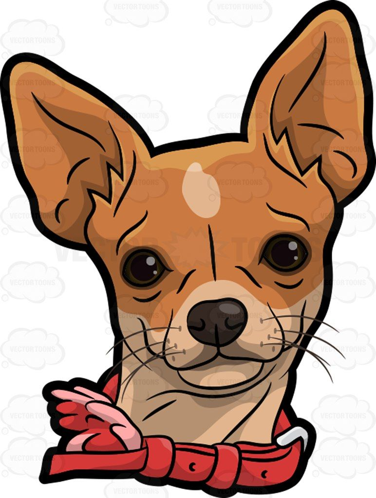 A head of with. Chihuahua clipart tiny dog