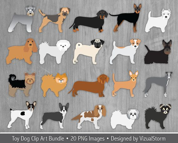 Chihuahua clipart tiny dog. Toy bundle small breeds