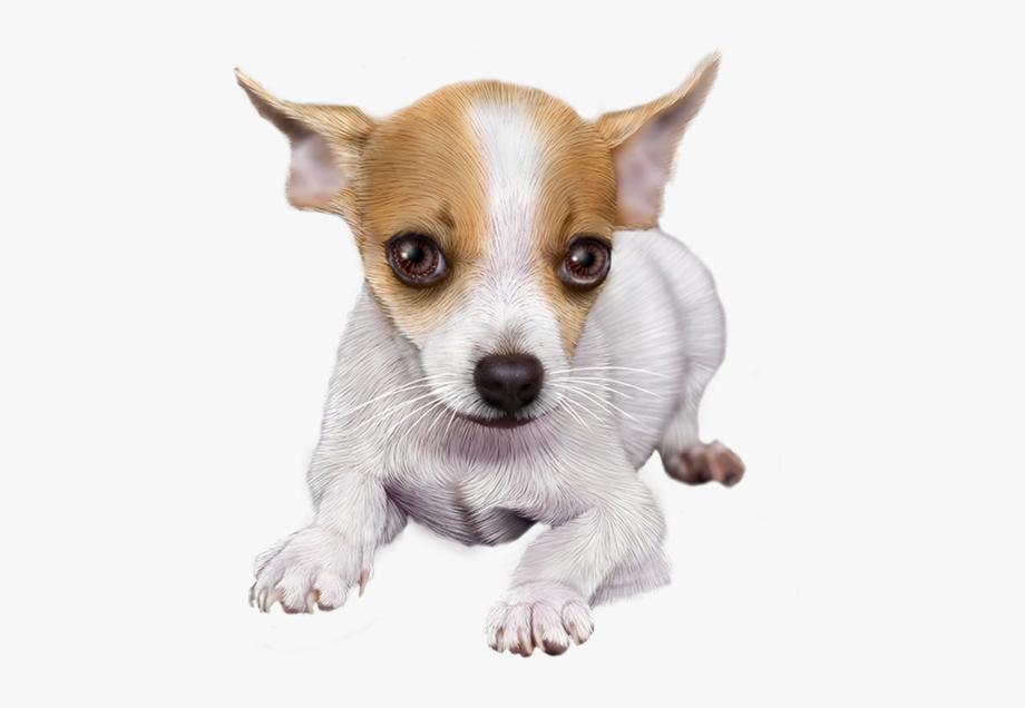 Chihuahua clipart tiny dog. Tubes pet png free